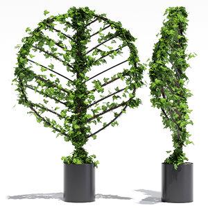 3D botanical banksia