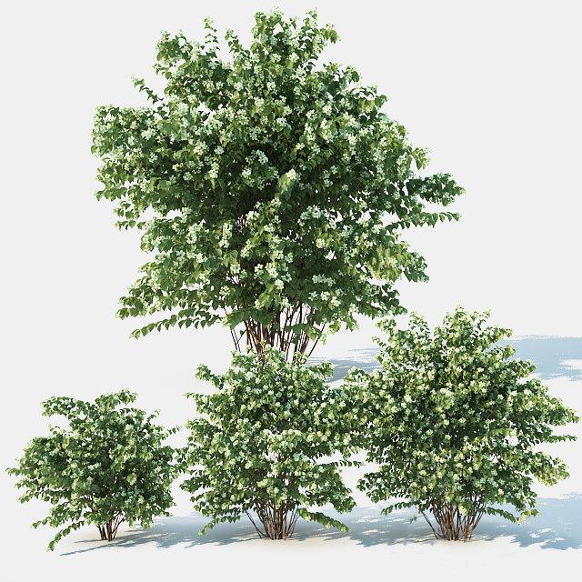 3D philadelphus blossom model