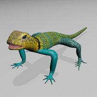 3D collared lizard model