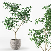 Small tree in pot