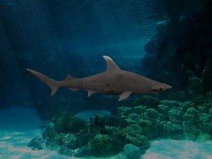 hammer shark rigged 3D model