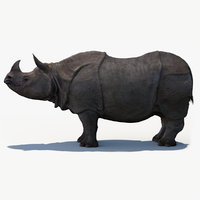 indian rhinoceros 3D model