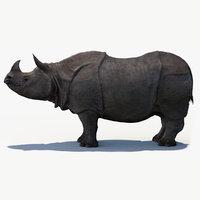 indian rhinoceros 3D model