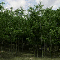 Bamboo Trees for scatter