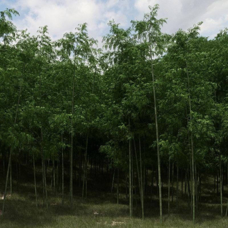 bamboo trees scatter 3D model