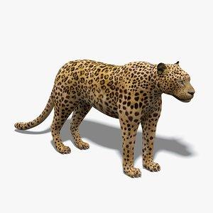 3D model leopard v-ray