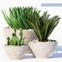 plants set 150