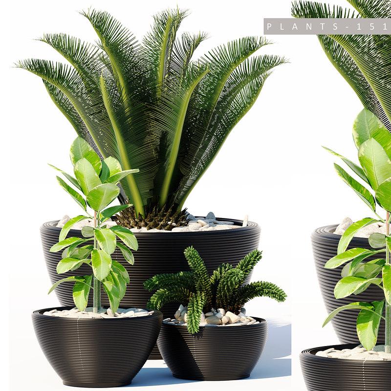 3D plants set 151