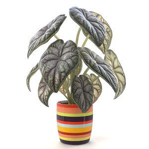 alocasia pot plant 3D model