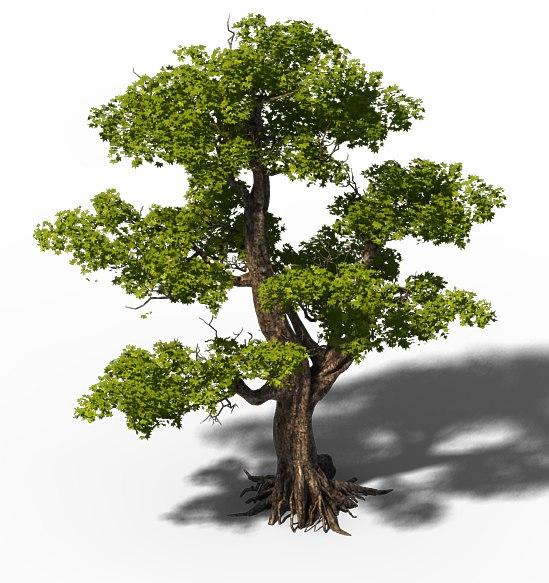 trees big model