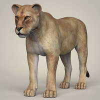 3D photorealistic lioness