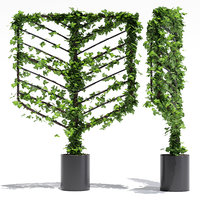 botanical acacia 3D