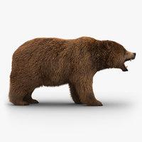 Bear (3) (FUR)