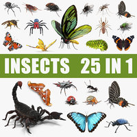 Insects Big 3D Models Collection