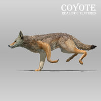 3D coyote animations model