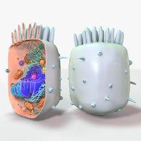 cell animal cytoplasma 3D