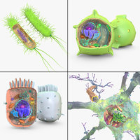 cell animal cytoplasma 3D