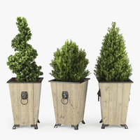 3D boxwood box model