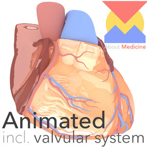 3D model schematic heart fully animations
