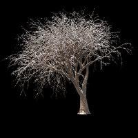 winter tree 013 3D model