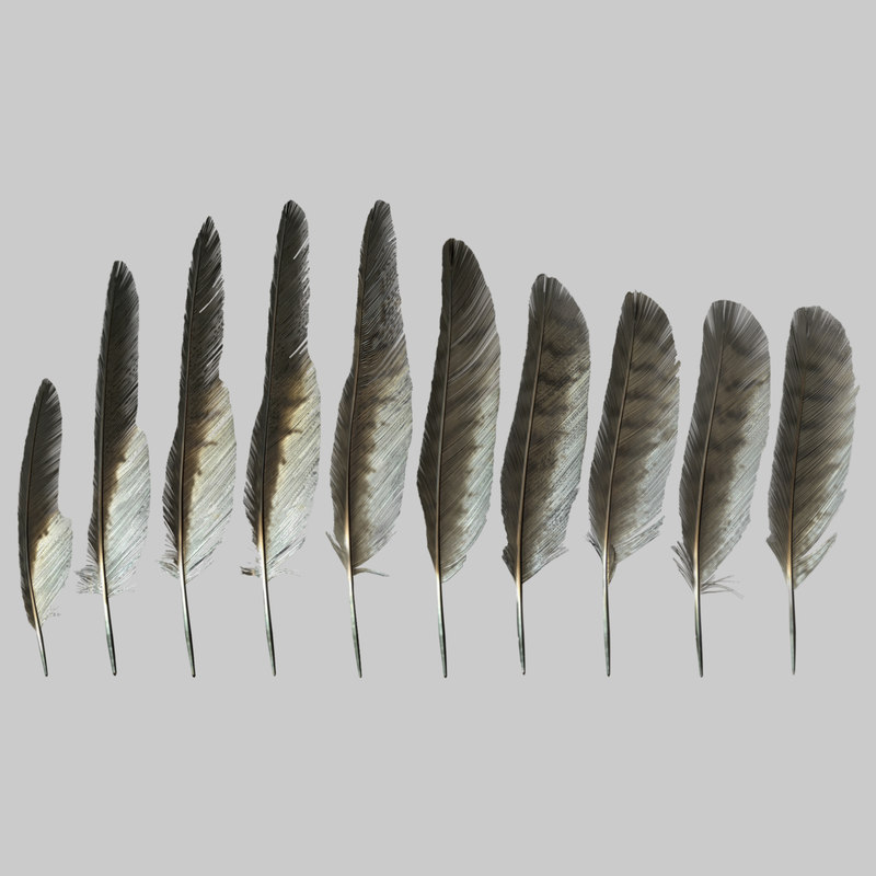 ready feather pack 3D model