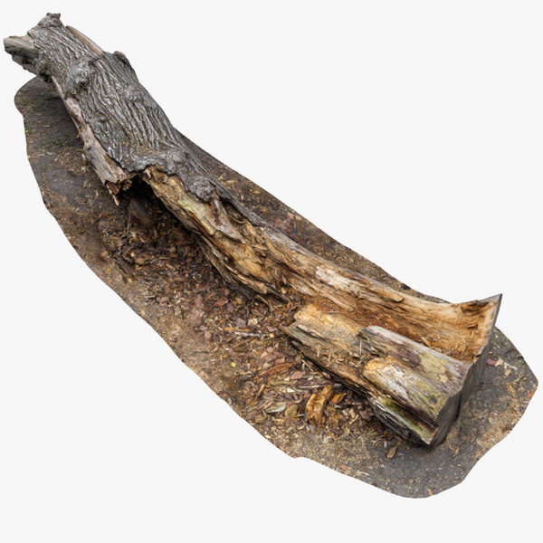 old rotten tree trunk 3D model