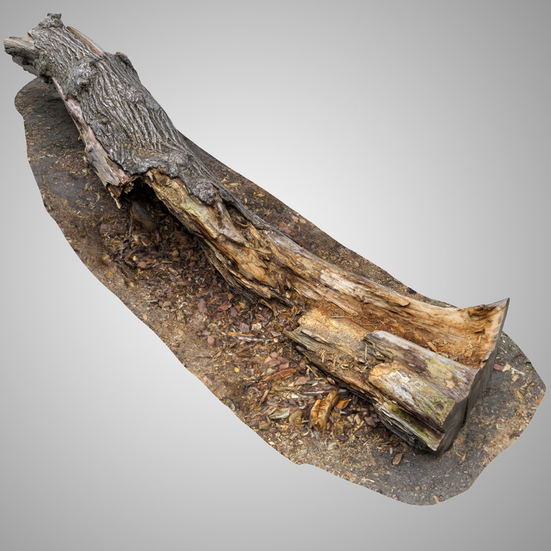 old rotten tree trunk 3D model