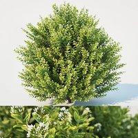 bush blossom 3D