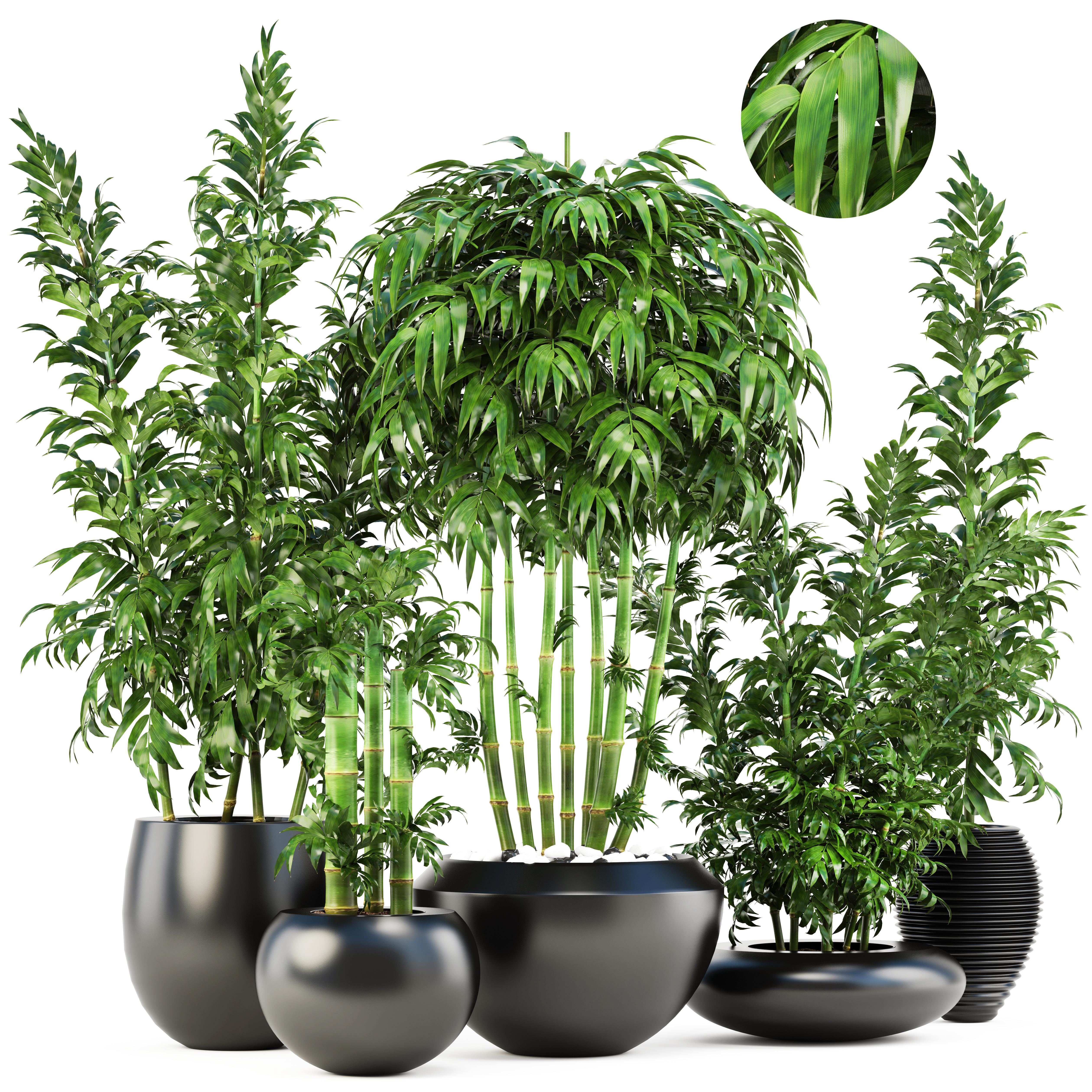 3d Bamboo Trees Model Turbosquid 1228393