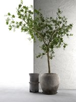 Outdoor Pots with Tree