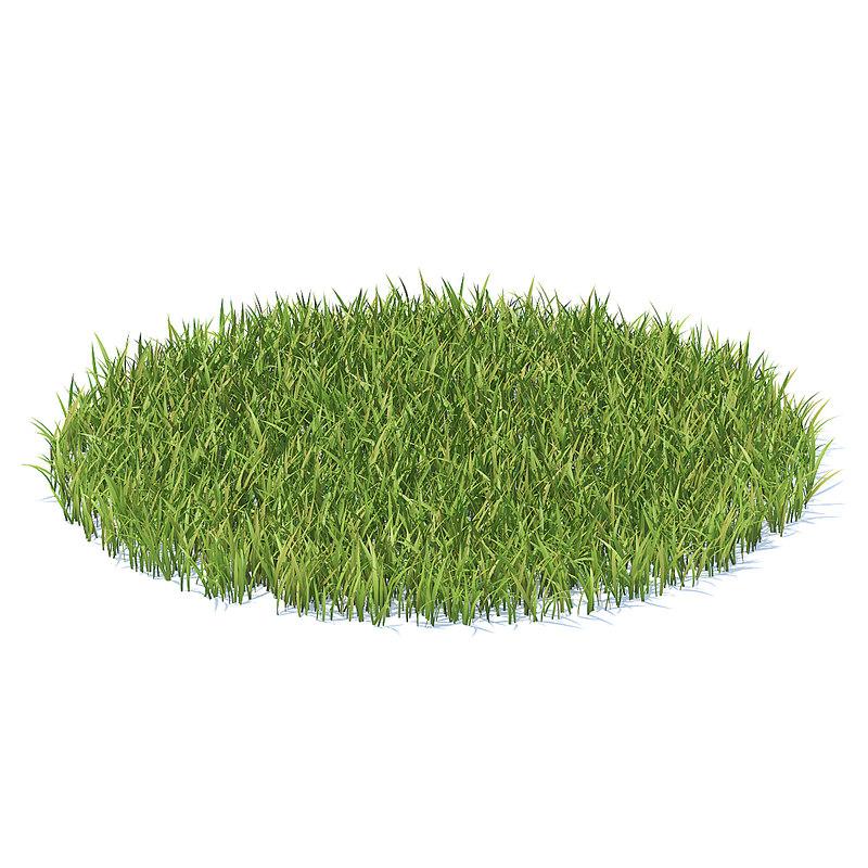 3D shaped grass model
