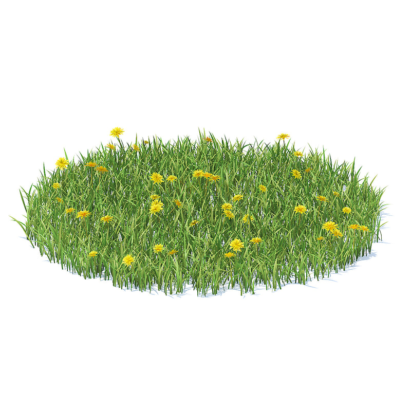 grass sow-thistle 3D