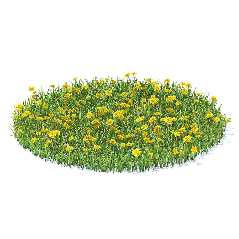 grass sow-thistle model