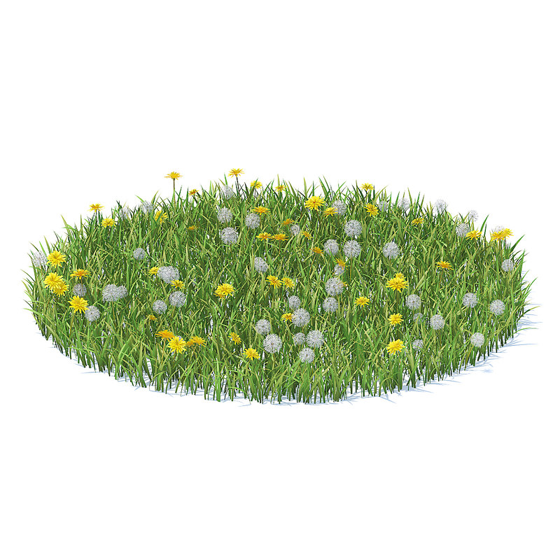 3D grass sow-thistle
