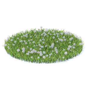 grass sow-thistle 3D model