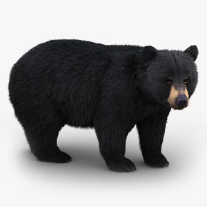 black bear fur 3D model