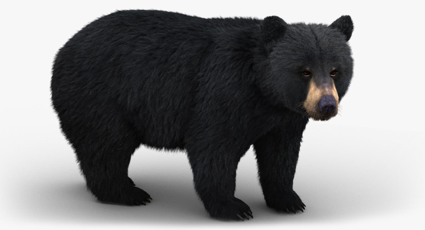black bear fur 3D model