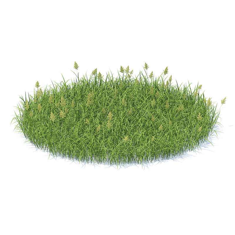 shaped flowering grass model