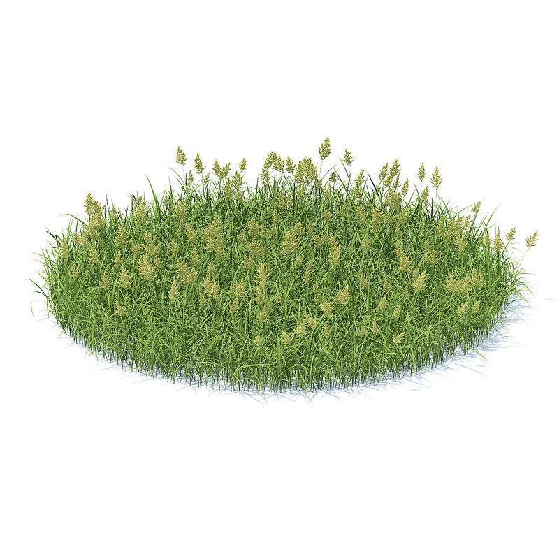 shaped flowering grass 3D