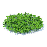 3D shaped grass plants