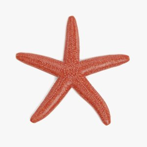 3D common starfish model