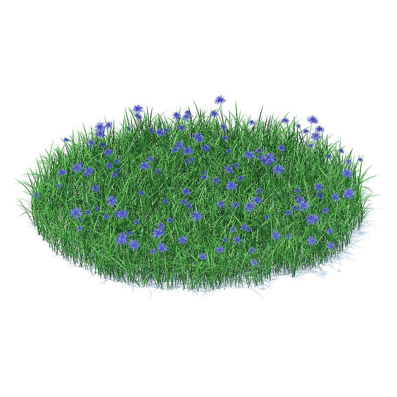 shaped grass cornflowers model