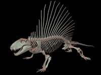 dimetrodon skeleton 3D model