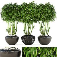 bamboo trees model
