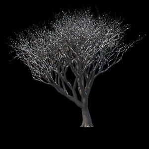 winter tree 014 3D model