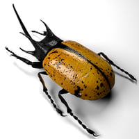 insect model