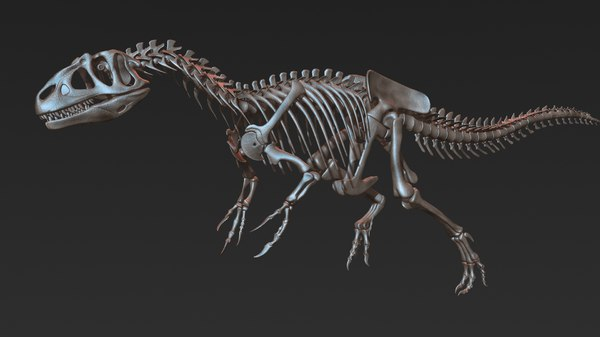 allosaurus skeleton model