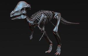 pachycephalosaurus skeleton 3D