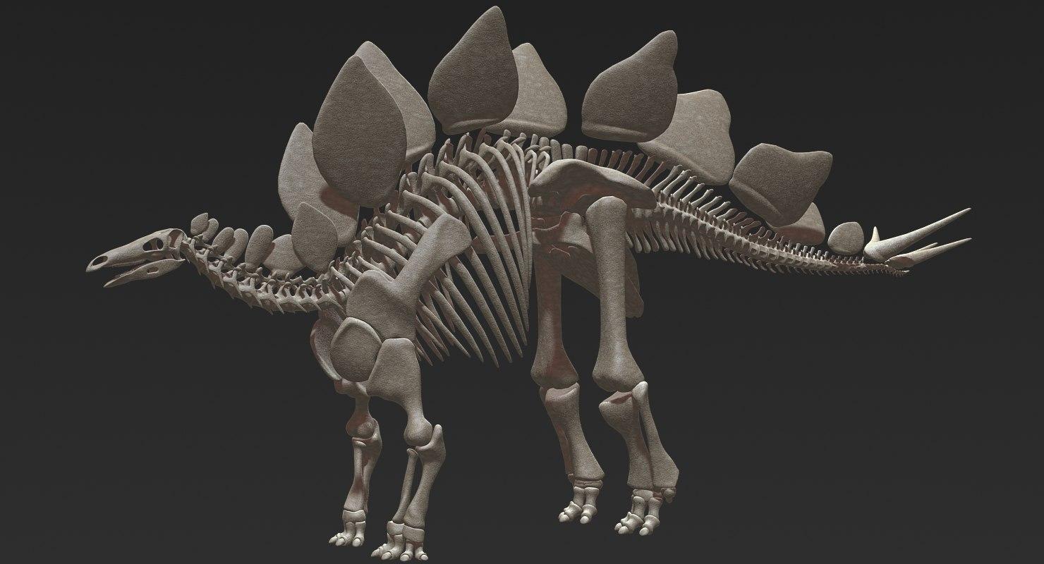 3D stegosaurus skeleton