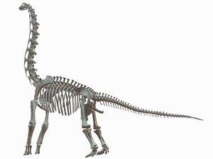 brachiosaurus skeleton 3D model